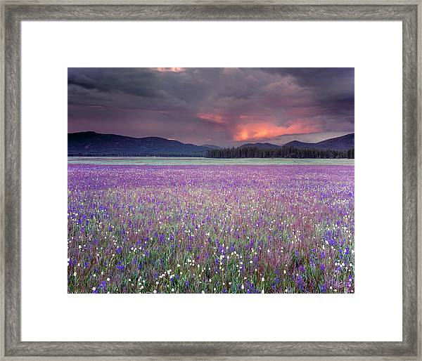 Mountain Meadow Purple Framed Print