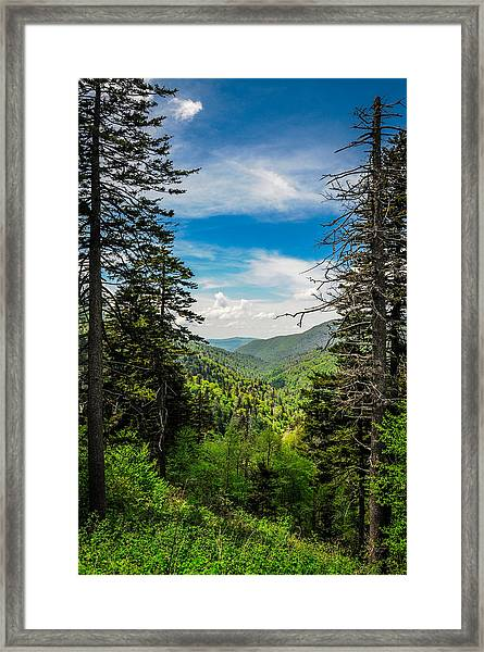 Mountain Pines Framed Print