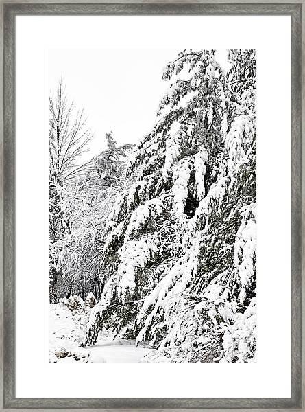 Mourn The Winter Framed Print