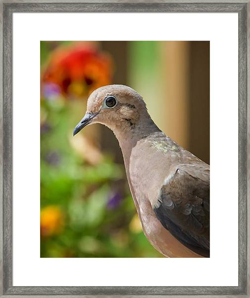 Mourning Dove And Flowers Framed Print