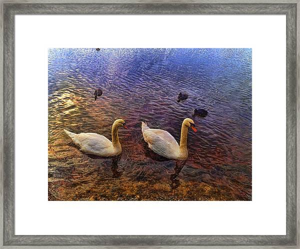 Mr And Mrs Swan Go Viisiting Framed Print