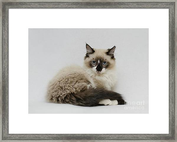 Mr. Atkin Framed Print