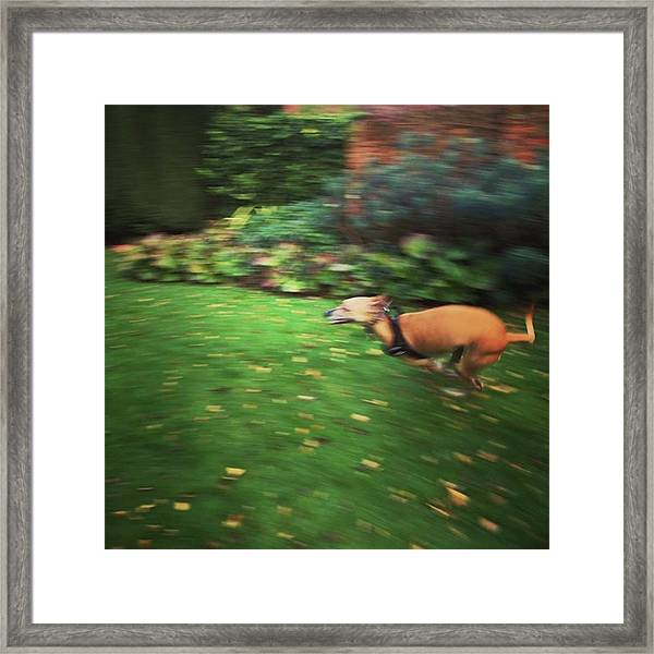 Mr Finly Enjoying A Few Rapid Laps Of Framed Print