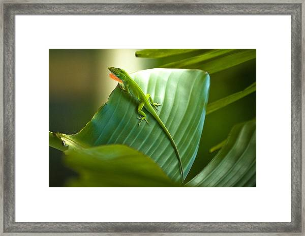 Mr. Green Looking For Love Framed Print