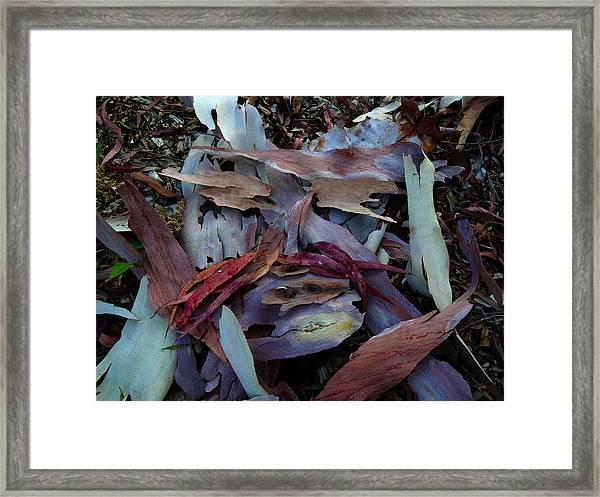 Mr Nature Faced Framed Print