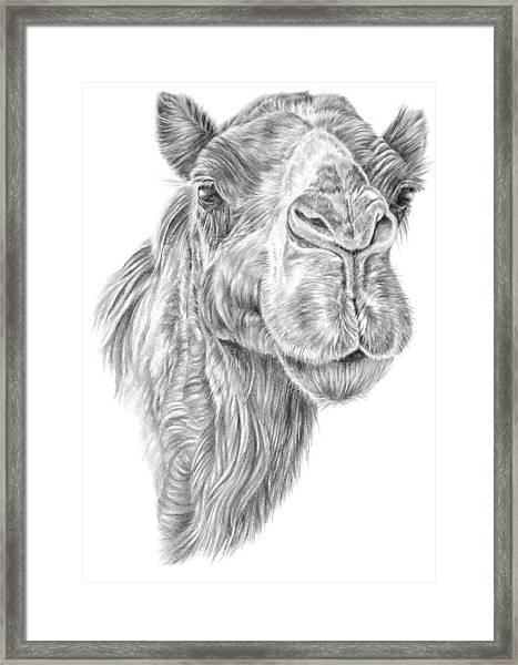 Mr Rak Camel Framed Print