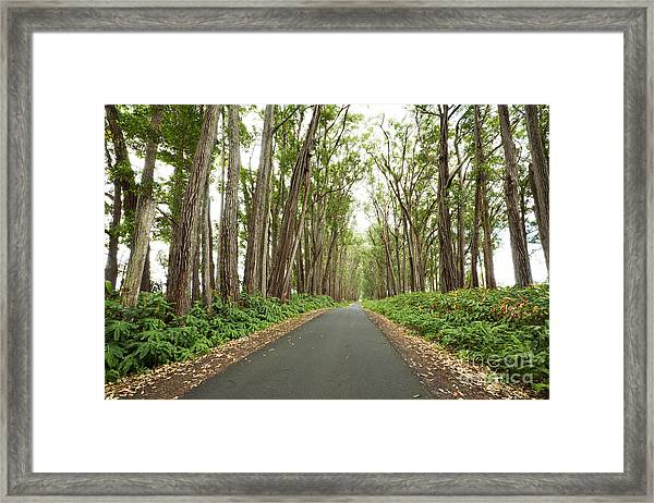 Mud Lane Framed Print