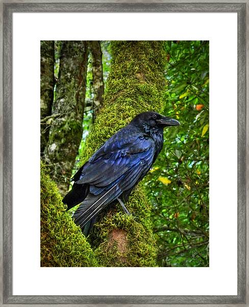 Framed Print featuring the photograph Muir Woods Raven 001 by Lance Vaughn