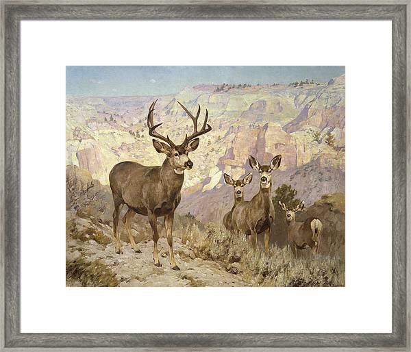 Mule Deer In The Badlands, Dawson County, Montana Framed Print