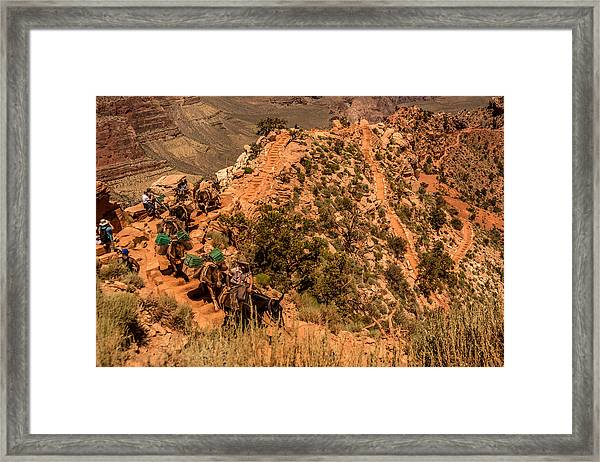 Framed Print featuring the photograph Mule Train South Kaibab Trail by Claudia Abbott