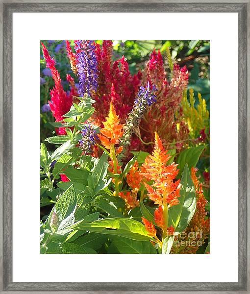 Multi-color Energy Framed Print