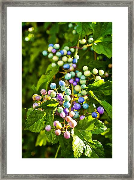 Multicolored Berry Vine Framed Print