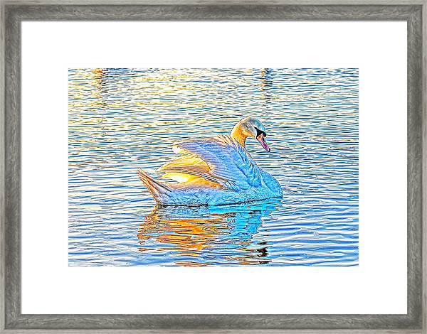 Multicolour Swan Framed Print