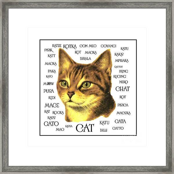 Multilingual Cat Framed Print
