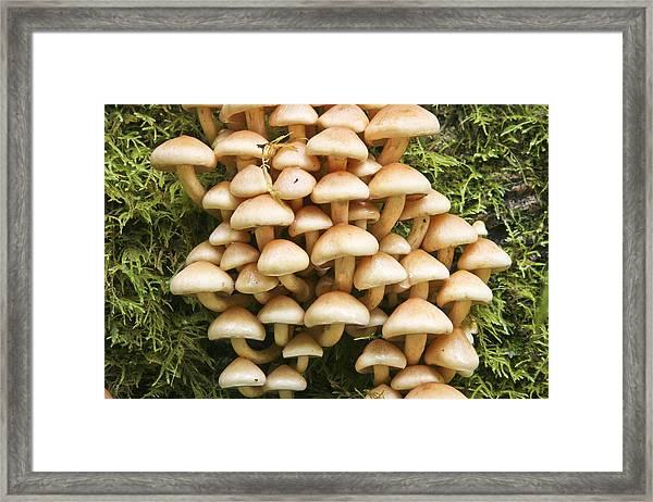Mushroom Condo Framed Print
