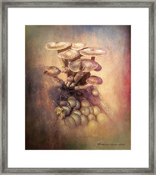 Mushrooms Gone Wild Framed Print