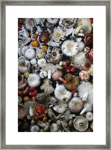 Mushrooms In Thailand Framed Print