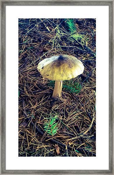 Mushrooms Of Oregon Framed Print