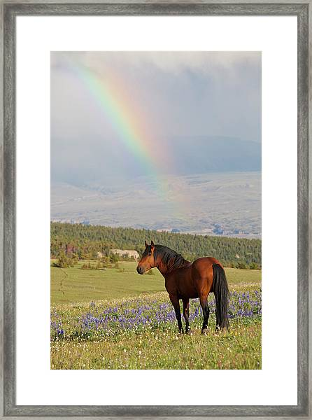 Mustang And Rainbow Framed Print