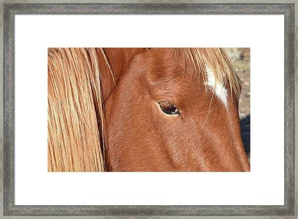 Mustang Macro Framed Print