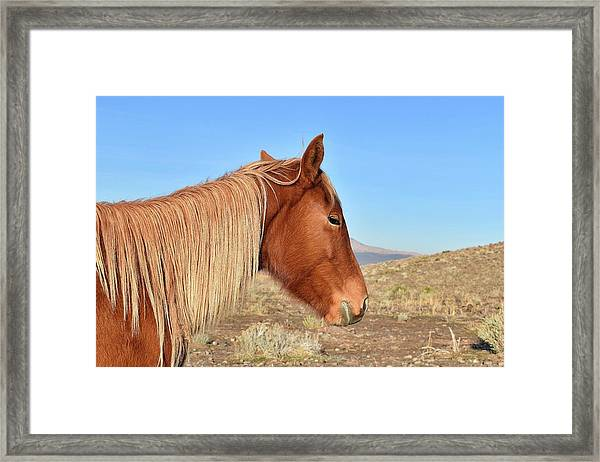 Mustang Mare Framed Print
