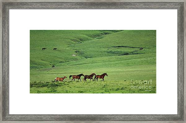 Mustangs Of The Flint Hills Framed Print