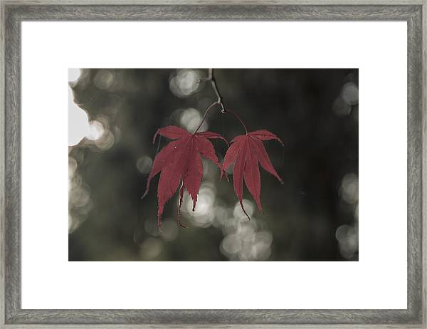 Muted Fall Colrs Framed Print