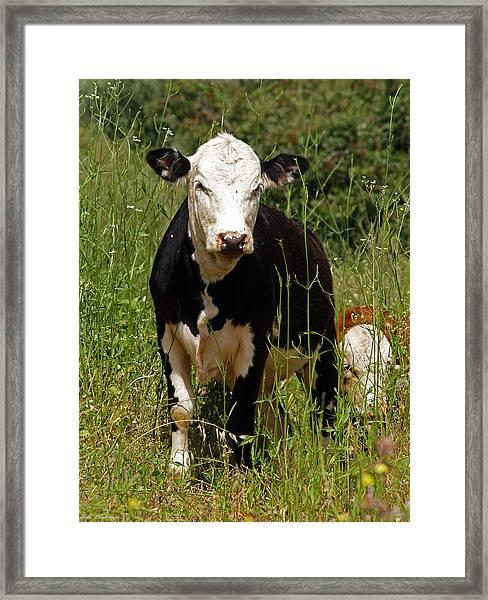 Muuuu Framed Print