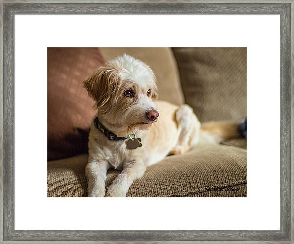 My Best Friend Framed Print