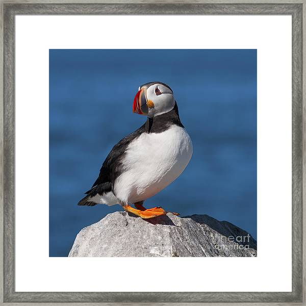 My Best Side.. Framed Print
