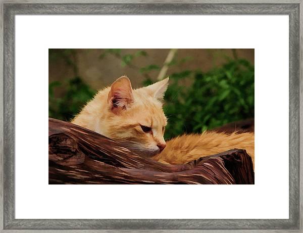 My Cats Framed Print