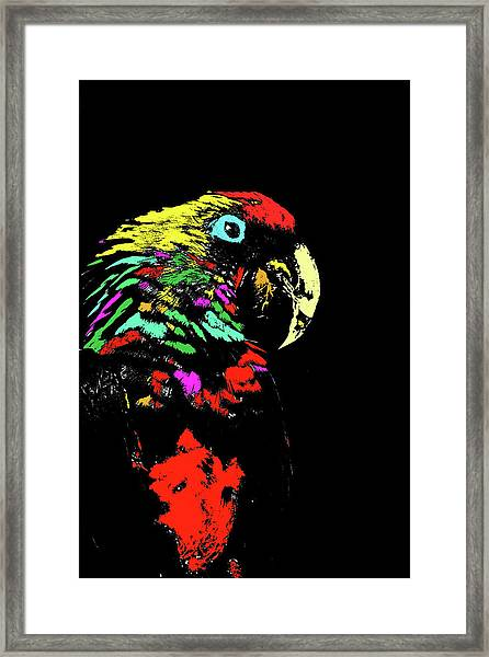 My Colorful Mccaw Framed Print