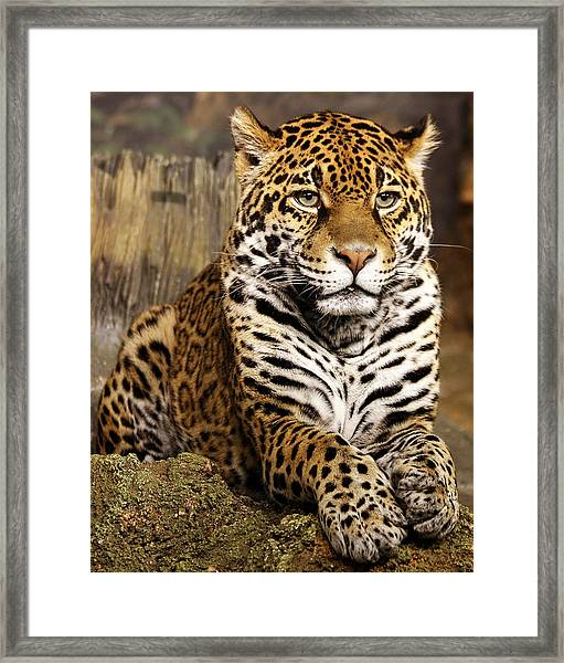 My Favorite Cat Framed Print