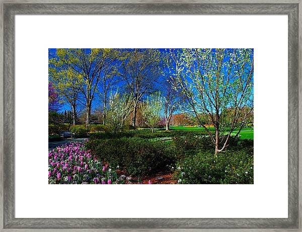 My Garden In Spring Framed Print