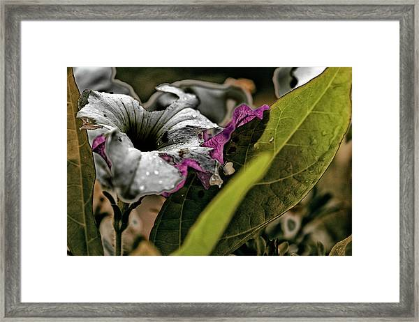 My How Your Beauti Is Evolving Framed Print
