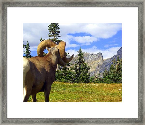My Kingdom Framed Print