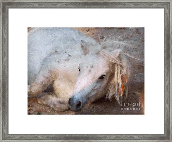 My Little Horse Framed Print