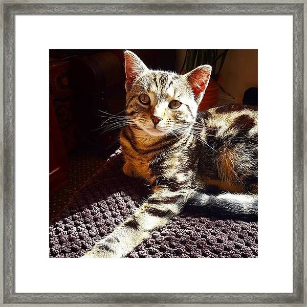 My Pretty Kitty #stiles Enjoying The Framed Print by Dante Harker