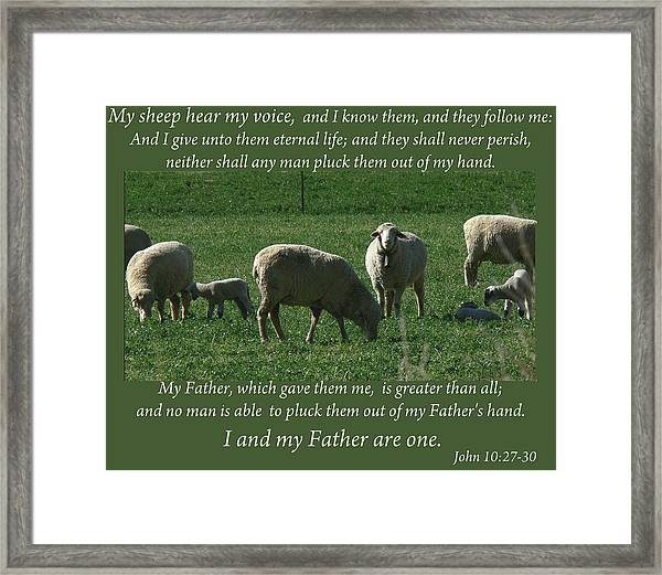 My Sheep Hear My Voice Framed Print
