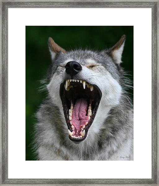 My What Big Teeth You Have Grandma Framed Print