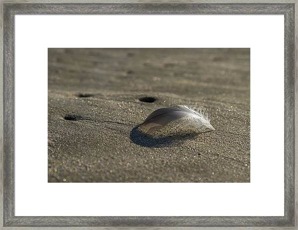 Mysterious Feather Framed Print