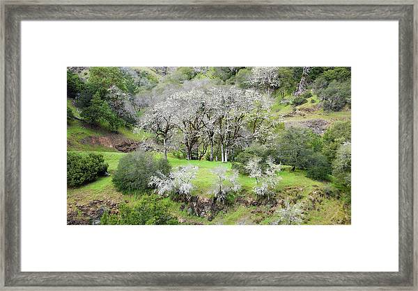 Mysterious Landscape In Sonoma County Framed Print