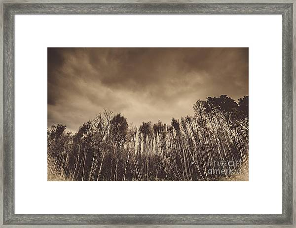 Mysterious Scary Forest Framed Print