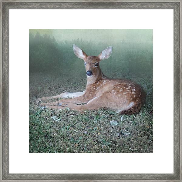Mystic Fawn Framed Print