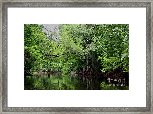 Mystical Withlacoochee River Framed Print