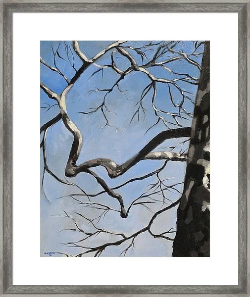 Naked Sycamore Framed Print
