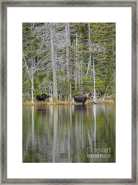 Nancy Pond - White Mountains New Hampshire Usa Framed Print