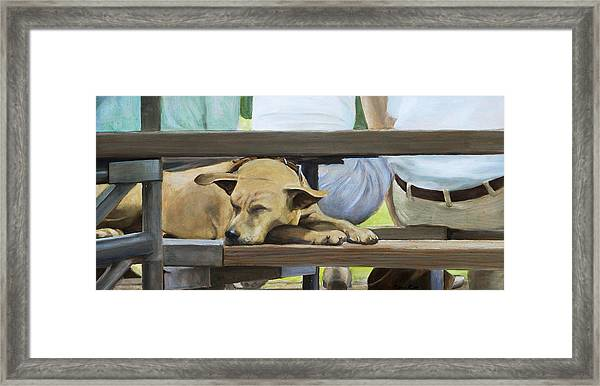 Naptime In The Bleachers Framed Print