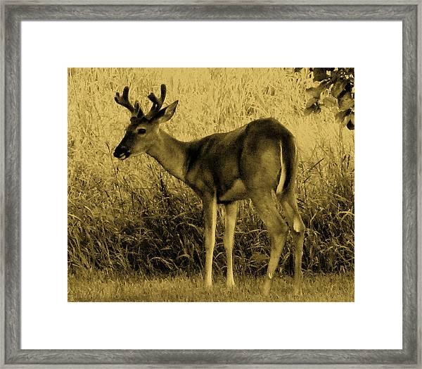 Natural Beauty- Vintage Version Framed Print
