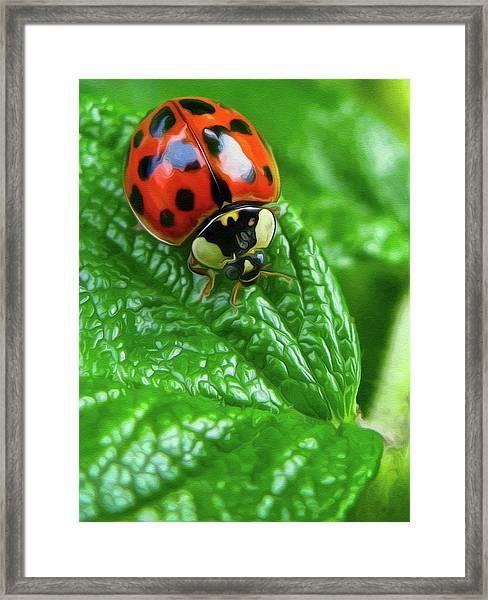Natural Color Contrast Framed Print